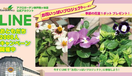 《終了しました》2020年7月23日(木)~8月2日(日)  LINEおともだち限定!季節の花苗プレゼント(お花いっぱいプロジェクト)