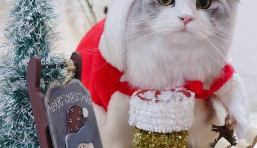 【結果発表】ペットとWinterPHOTO! ハッシュタグキャンペーン